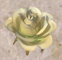 Rosepetal5