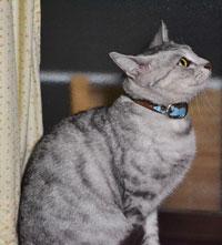 Cat_door1